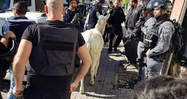 IOA pillages stores, seizes donkey and cars in Silwan