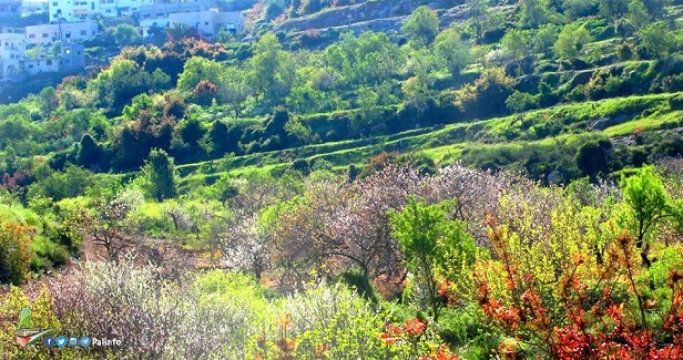 Salfit Mountains: The beauty of Palestine's nature