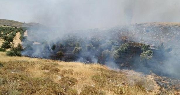 West Bank farmlands destroyed in Israeli arson attacks