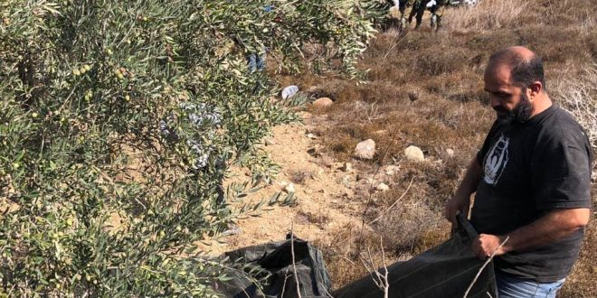 Israeli settlers increasing their attacks on Palestinian farmers, IOF protects their aggression
