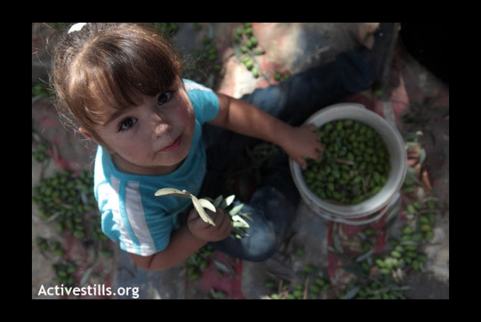 Palestinian Farmers Protest Land Restrictions as Olive Season Nears