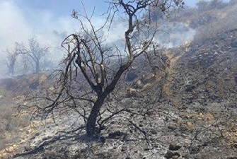 Israeli settlers cut down olive trees in Salfit