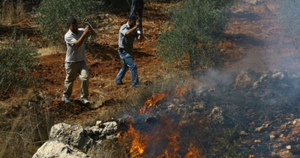 Foreigners injured, 450 olive trees burned in settlers' attack