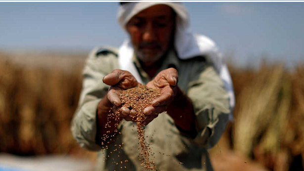 Palestine launches its first agricultural cluster