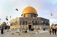في المسجد الأقصى.. طيور تطرب السامعين وحواصل لا تجوع